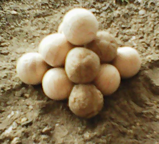 Lot de boulets à lancer pour maquettes médiévales