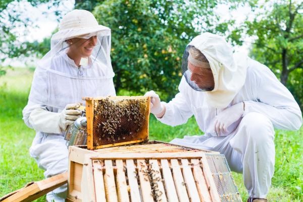 acheter du miel-apiculteur-apiculture-vente de miel-cire d'abeilles-pollinisation-miel biologique-apicultrice-miel pur-producteur de miel-prix du miel-miel artisanal-récoltés-apiculteurs-miellé