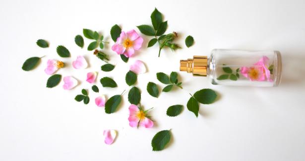 eau de parfum Monfocus--2516394 via Canva.com