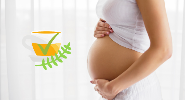 enceinte tisanes conseillées