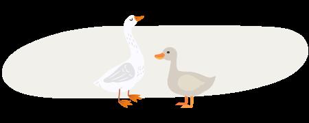 foie gras de canard vs foie gras d'oie