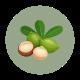 bienfaits de l'huile de macadamia pour la peau