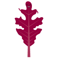 feuilles-de-chêne
