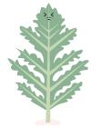 salade-frisée-légumes-dessin
