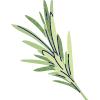 artichaut-arômes-thés-citronnelle-aromatique