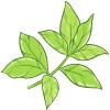 rooibos-saveur-antioxydant-théière