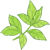 earl-grey-fluor-torréfaction-vitamine-C