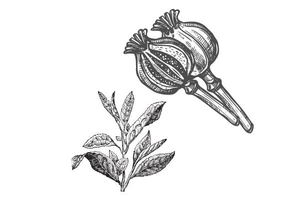 opium-the-icone