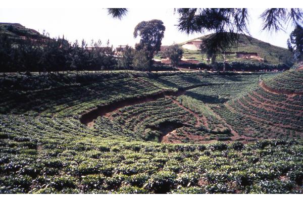 plantation-the-afrique