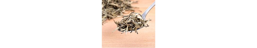 thé-blanc